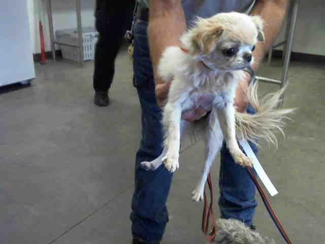 PetHarbor com: Animal Shelter adopt a pet
