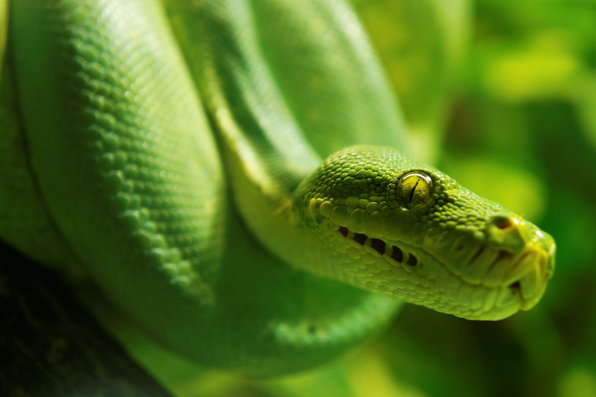 Parseltongue by Rob Higginbotham on 500px