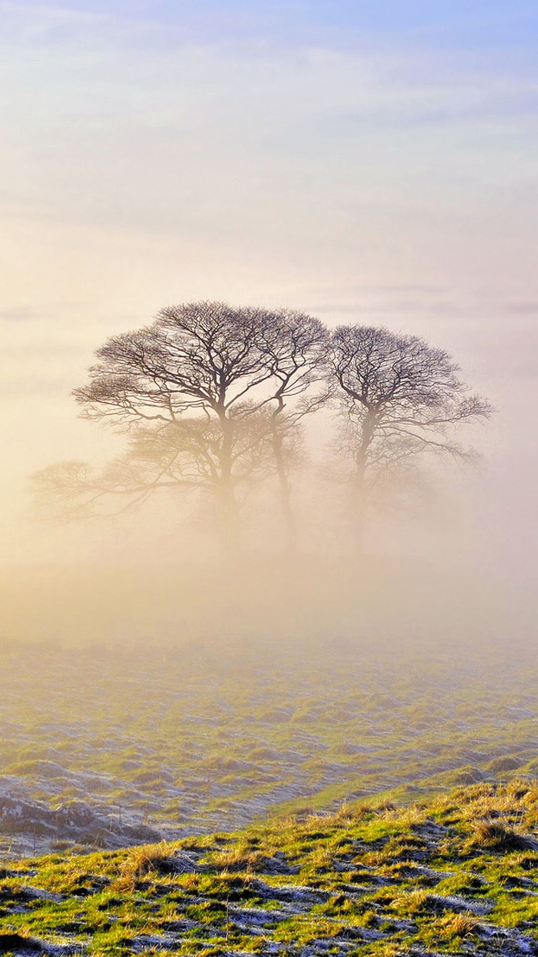 Lonely Tree In Mist iPhone 6 plus wallpaper
