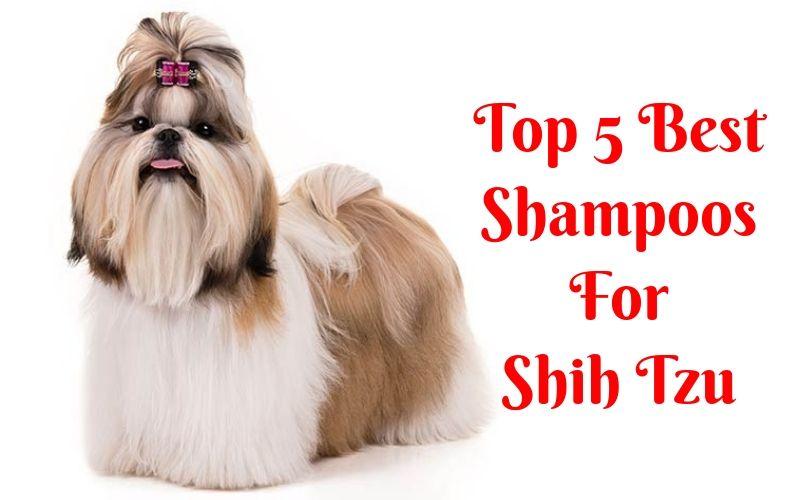 Top 5 Best Shampoos For Shih Tzu Puppy In 2020 Shih Tzu Puppy