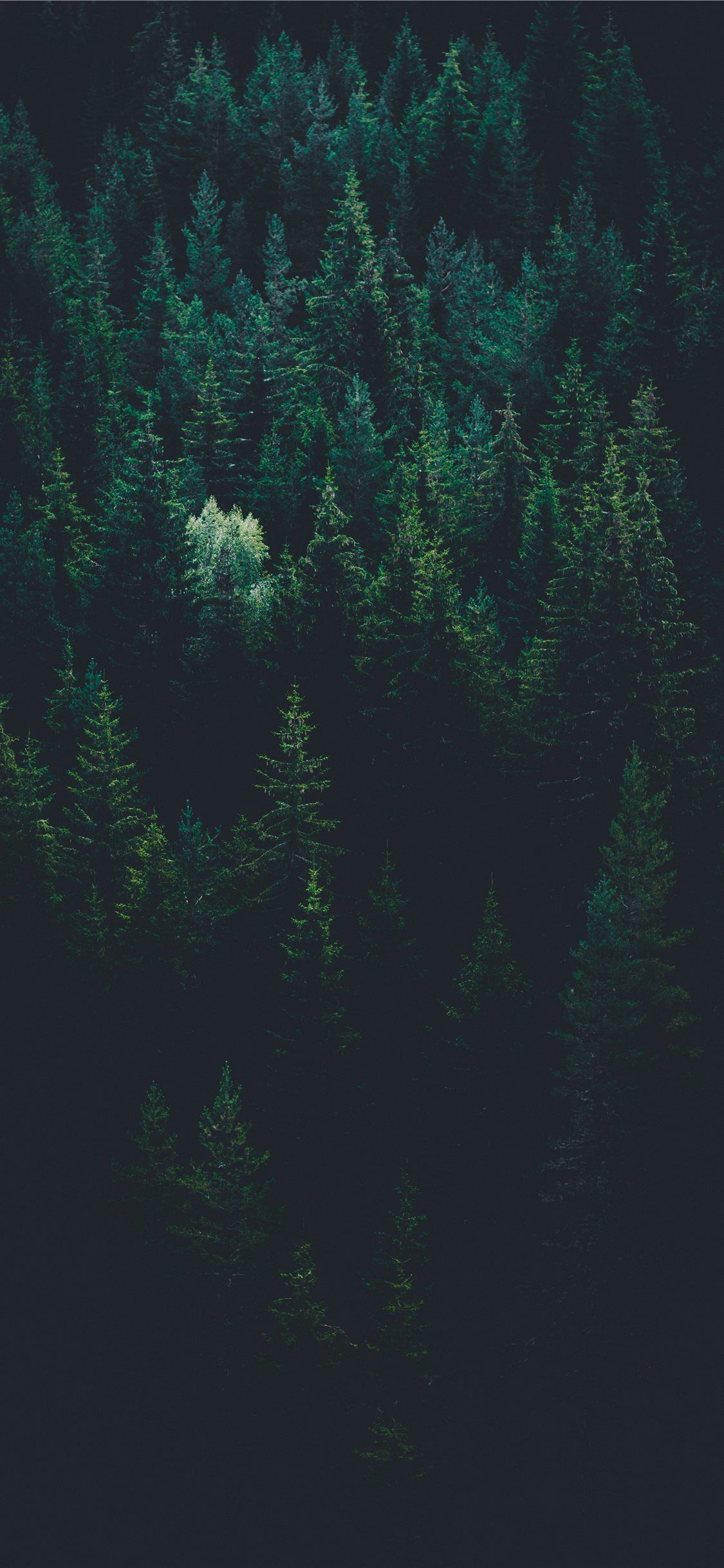 Scenery Of Forest Trees Iphone X Wallpapers In 2020 Fotografiya