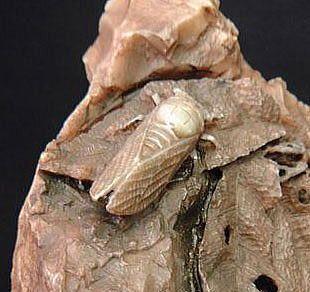 寿山石に彫られた蝉 中国製 中国で採掘される寿山石は印材としても使われています 柔らかく粘りがあり、加工が容易なため 中国では古来から精巧な彫刻作品が作られてきました