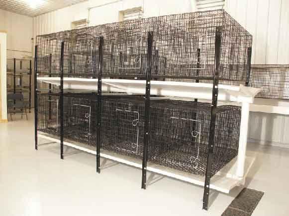 Flushkleen rabbit cage rack system rabbit kennel cages for Dog kennel systems