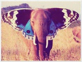 Elephanteyyy:)