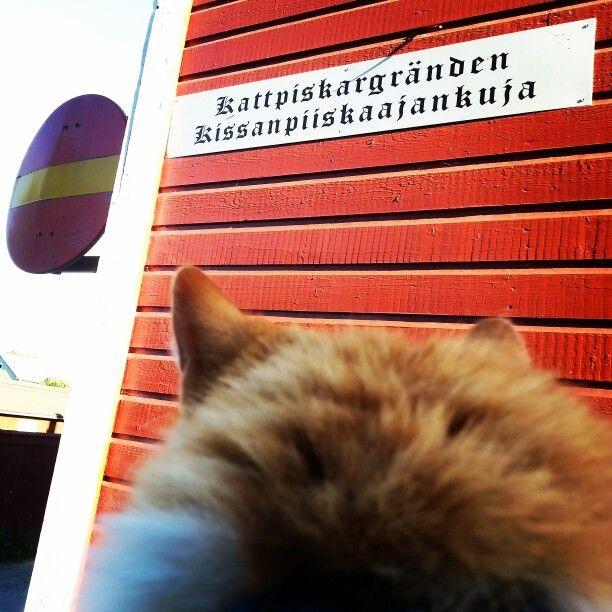 Kissanpiiskaajankuja ( Photo by Elina Hakola )