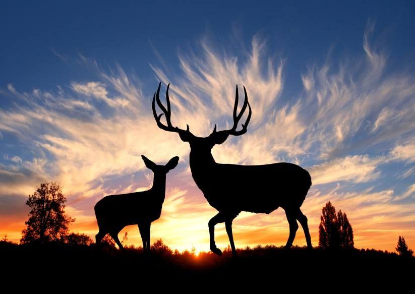 Deer park tx sexy manas