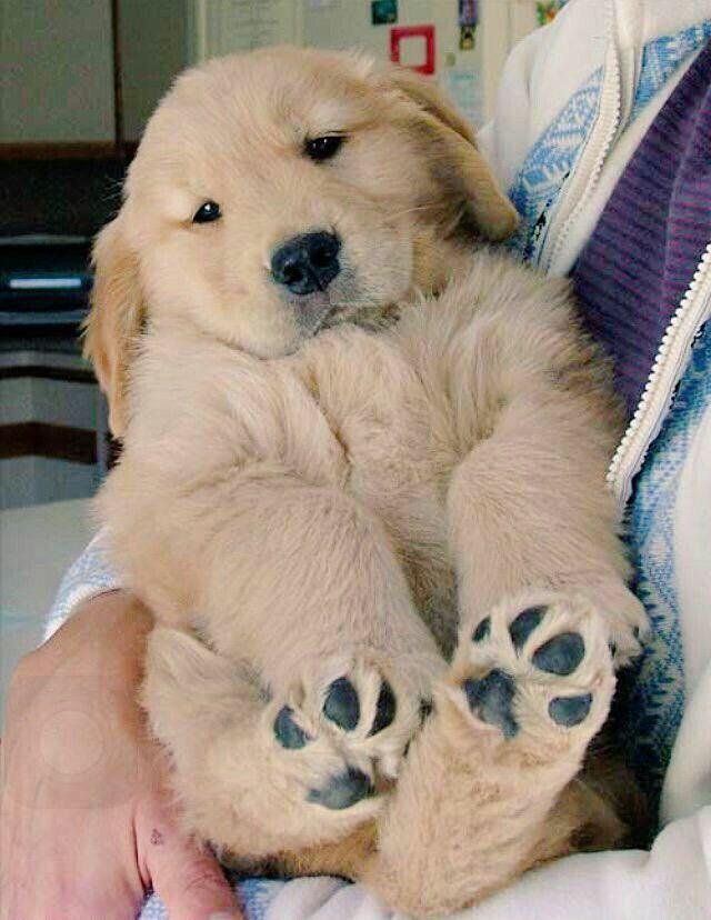 Pin By Alyssa On Animals Pinterest Puppies Cute Puppies
