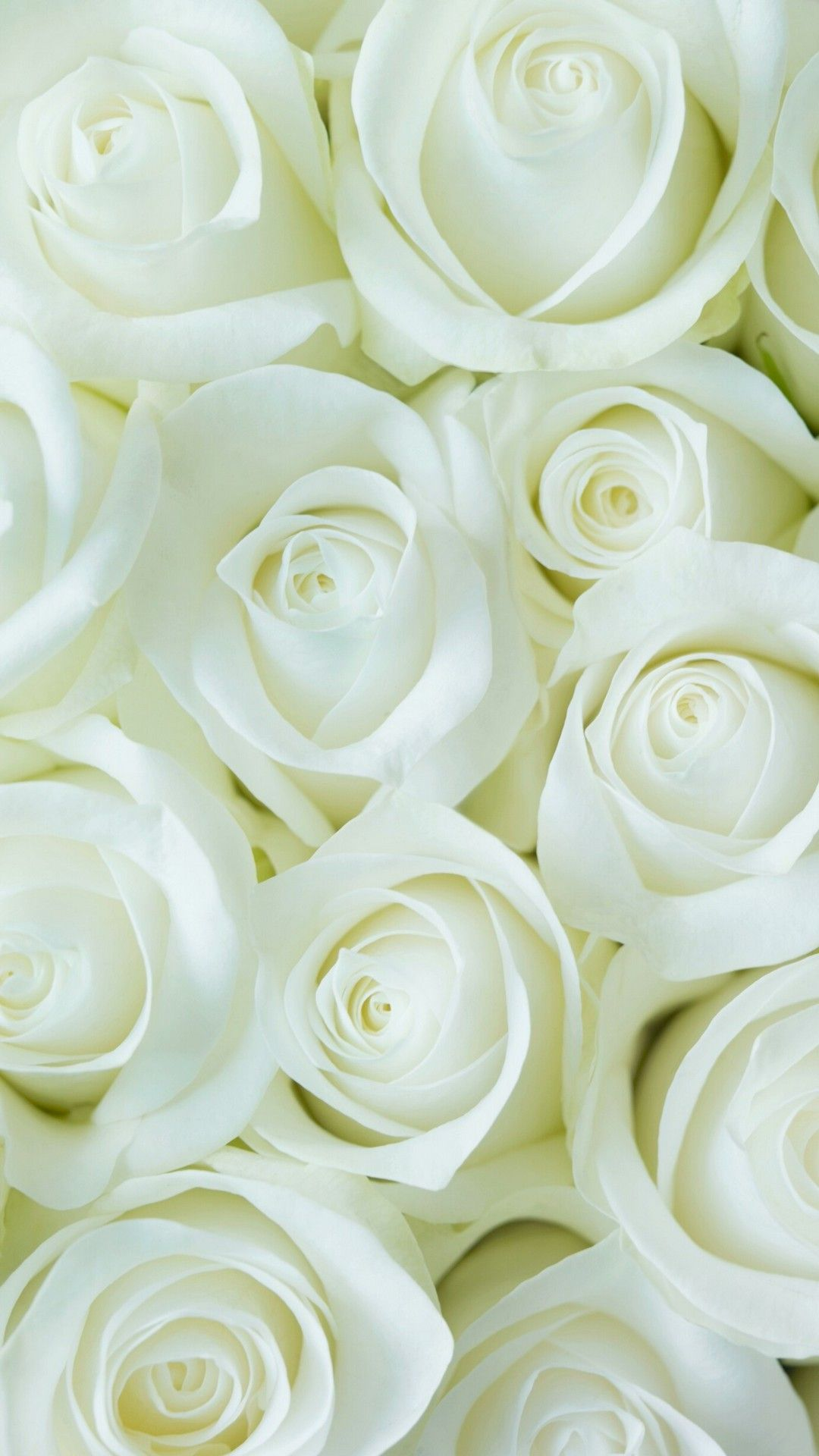 White Flower Wallpaper For Mobile Android Best Hd Wallpapers Rose Flower Wallpaper White Roses Wallpaper Flower Wallpaper