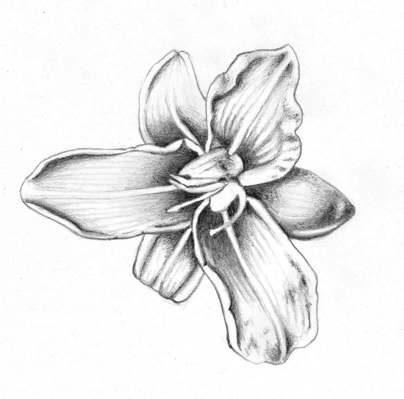 Pin On Flower Art Drawing