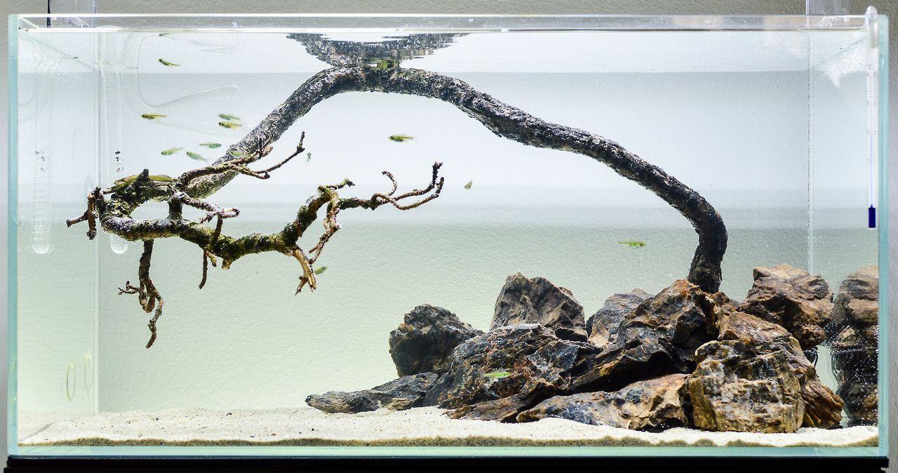 I Quickly Set Up A Hardscape Only Aquarium Using A Dead Pinus