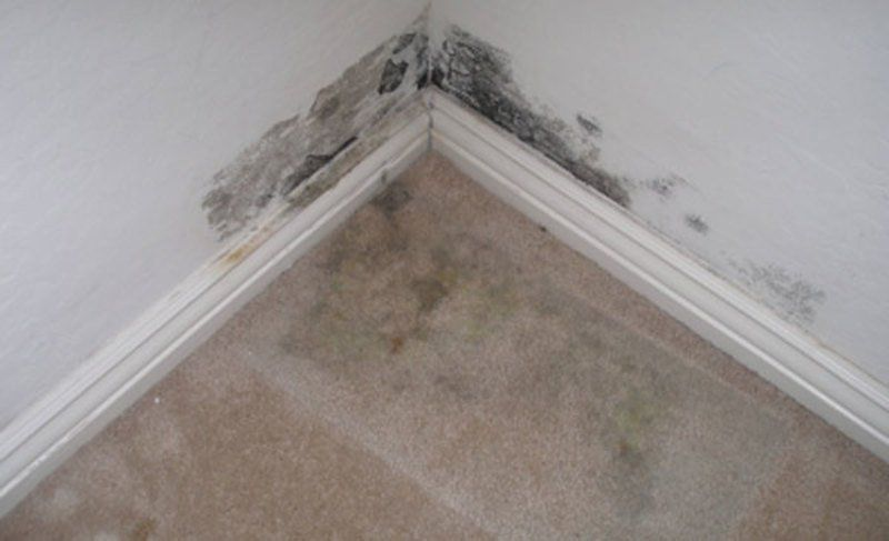 carpet mold removal services