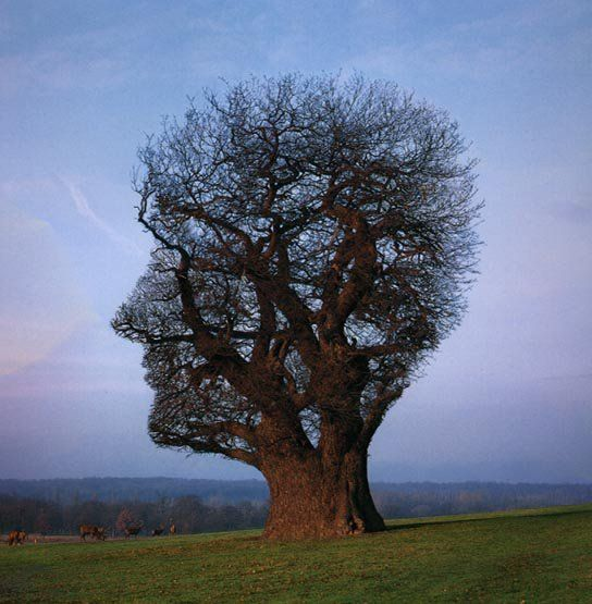 What Type Of Tree Best Describes Your Real Personality Unique Trees Tree Art Amazing Nature