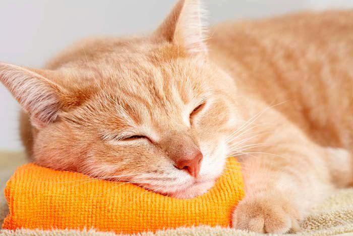 К чему снятся кошки: толкование снов с участием четвероногих пушистиков