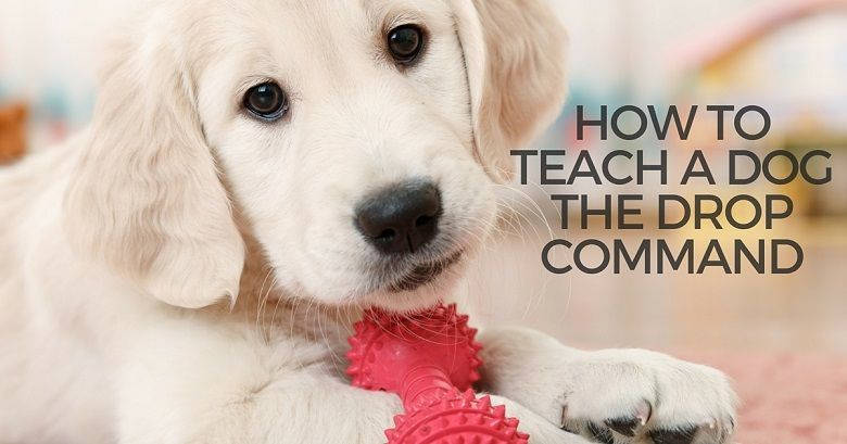 How to teach a dog the drop command