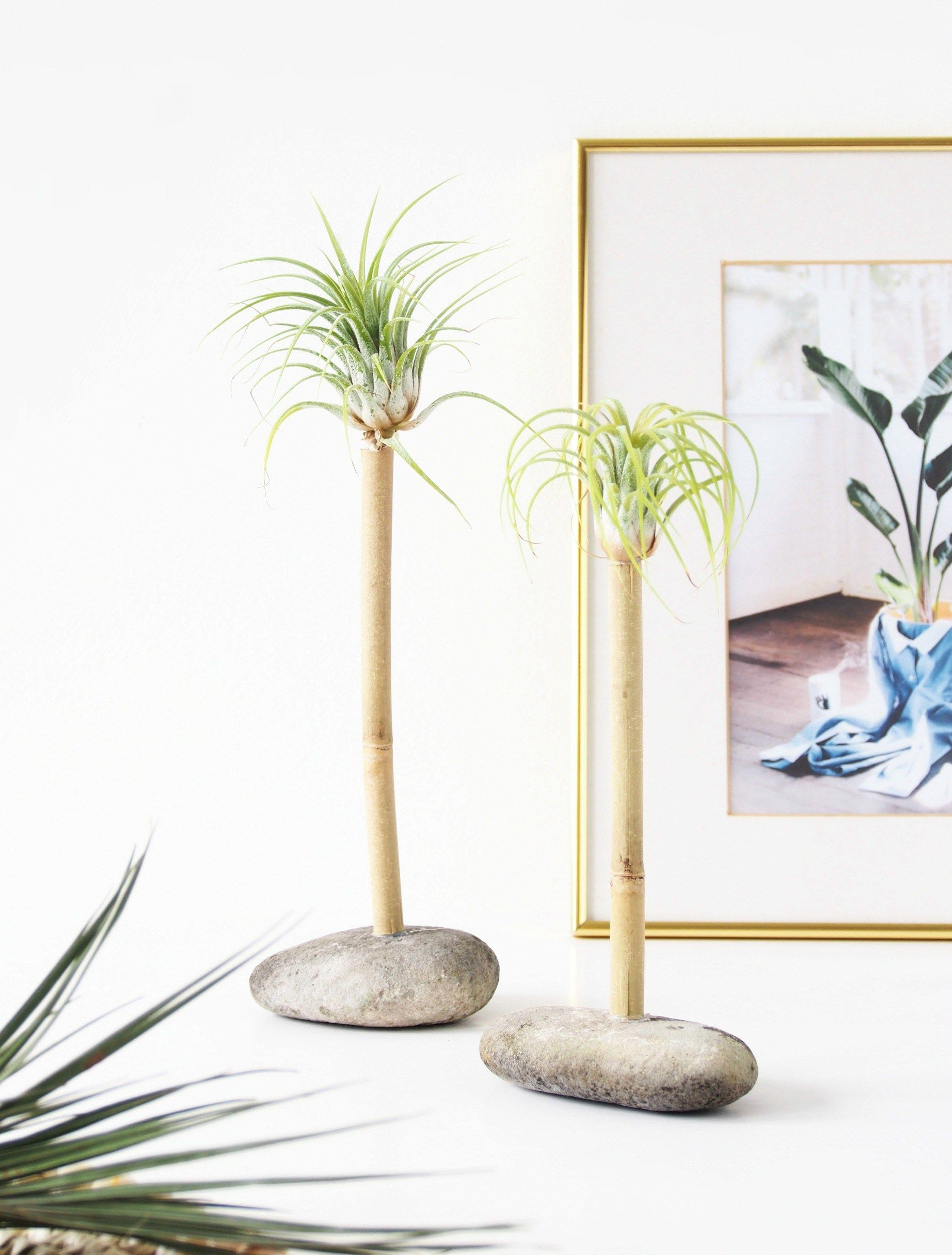 DIY Air Plant Palms. Make this fun mini stay-cation resort with the lovely Tillandsia darlings.