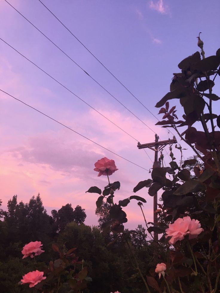 fotografía estética de flores