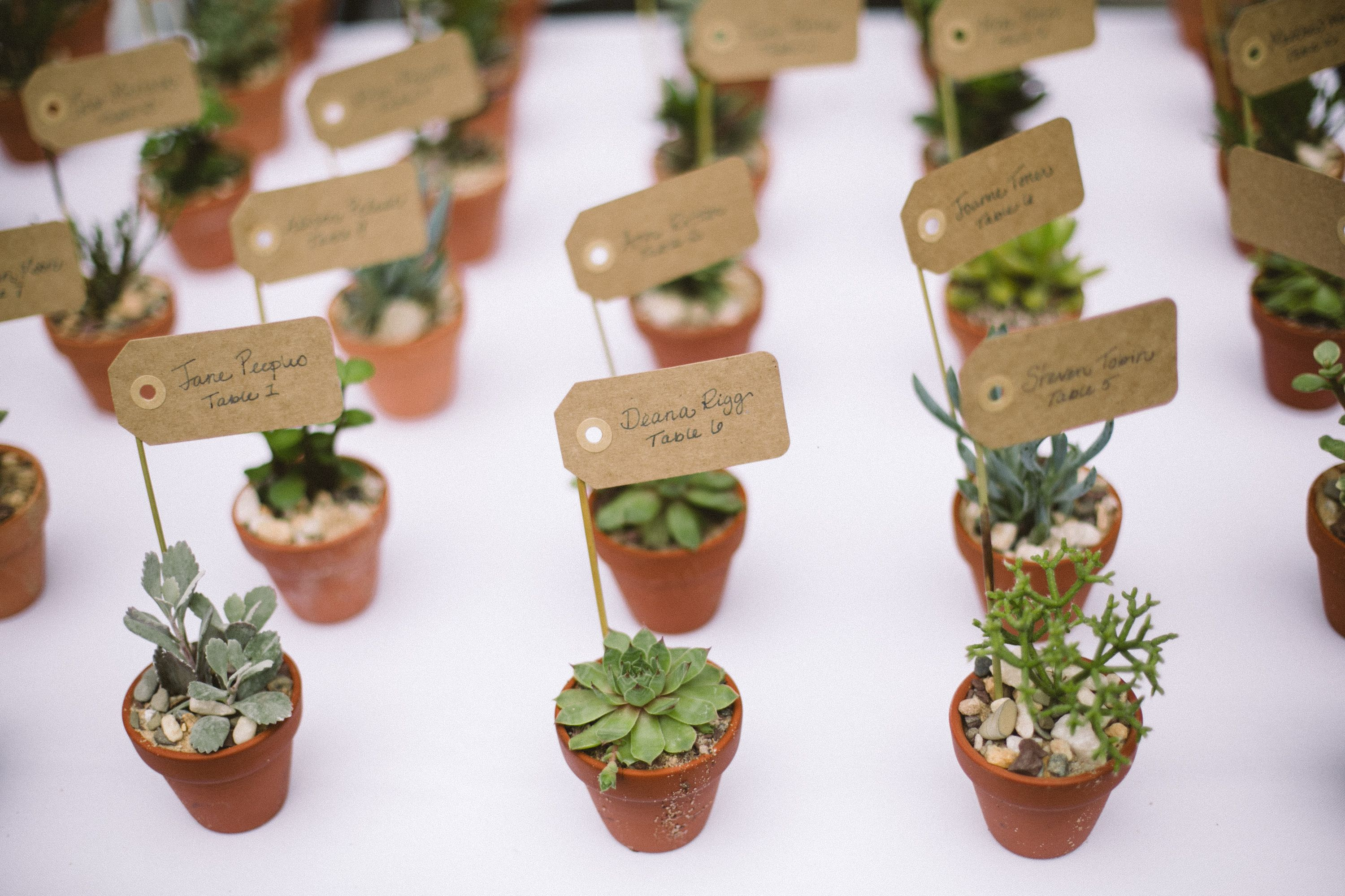 succulent wedding favors Place Cards hot Summer wedding at the Morris Arboretum featuring bold colors natural textures a cool bouquet and mini succulent favors