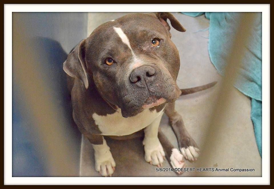 Pin By Randy Perkins On Life S The Pits And Other Animals Dogs Shelter Dogs Animals