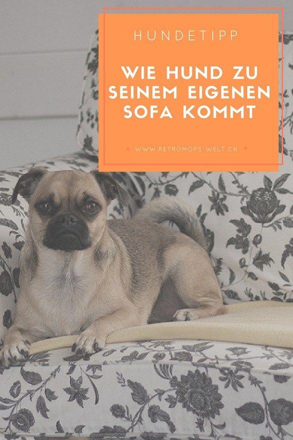 Wie Mia Zum Eigenen Sofa Gekommen Ist Retromops Mops Hund Hundeblog Schweiz Pfote Hundegeschichten Alltagstipps Hundeliebe Hund Hunde Hundegeschichten