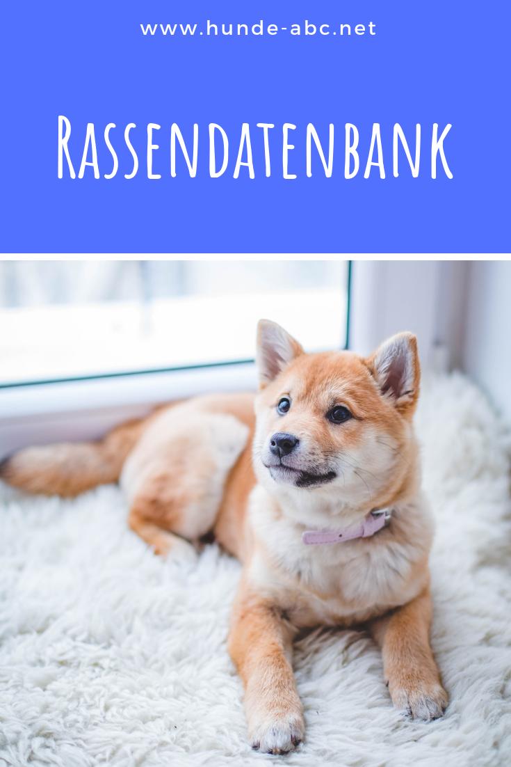 Informationen Zur Rassendatenbank Von Hunden Allgemeine Infos Hundeschule Hunde Hundehaltung