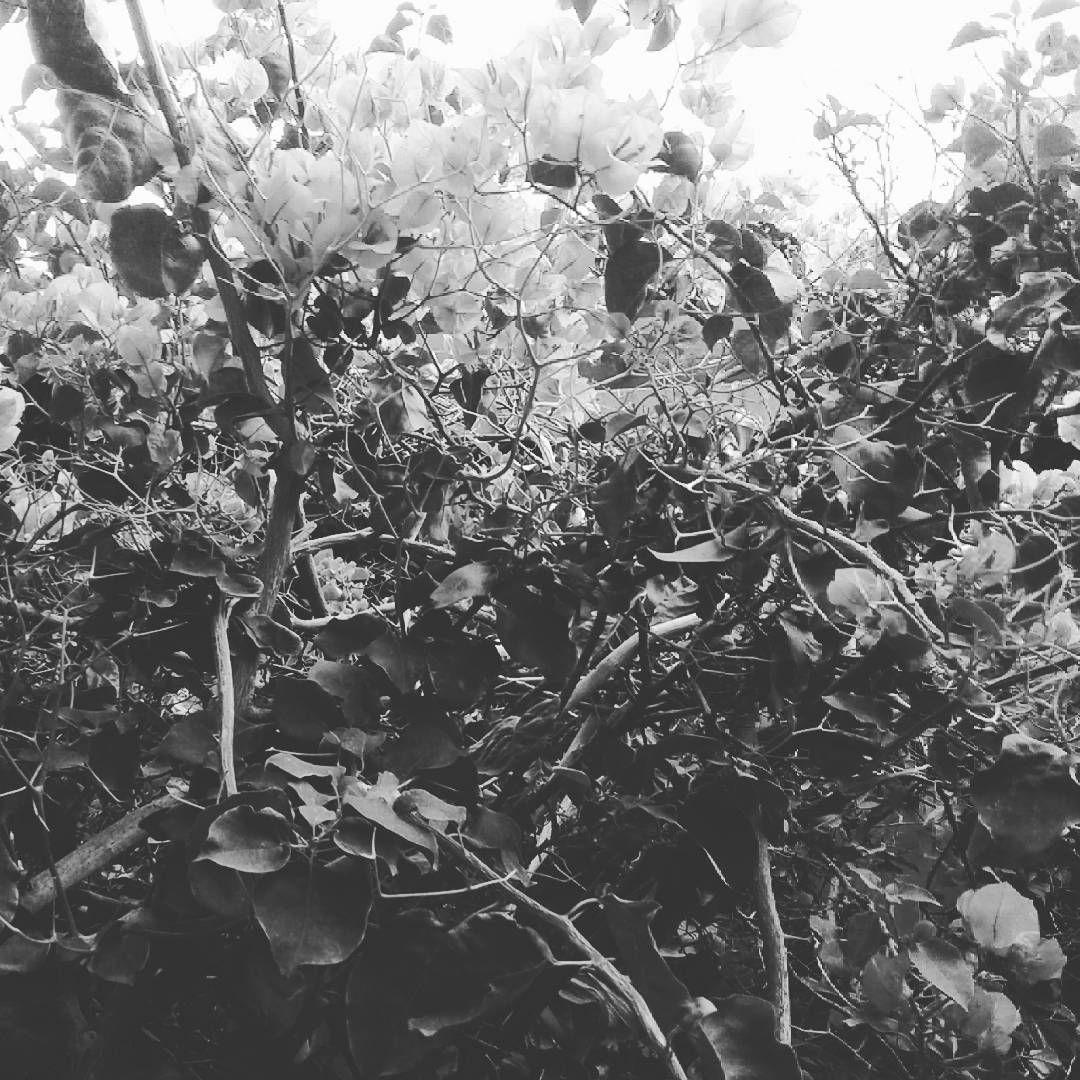 #monocrome #monocromo #santarita #photography #fotografia #fotografiadigital #flowers #plants http://tipsrazzi.com/ipost/1521183295181129587/?code=BUcVCW7h4dz