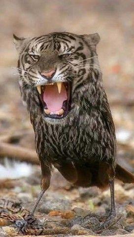 Tigerbird Verruckte Tiere Lustige Bilder Von Tieren