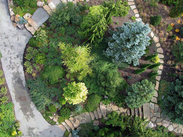 Dwarf Conifer Garden Conifers Garden Garden Design Garden Front Of House