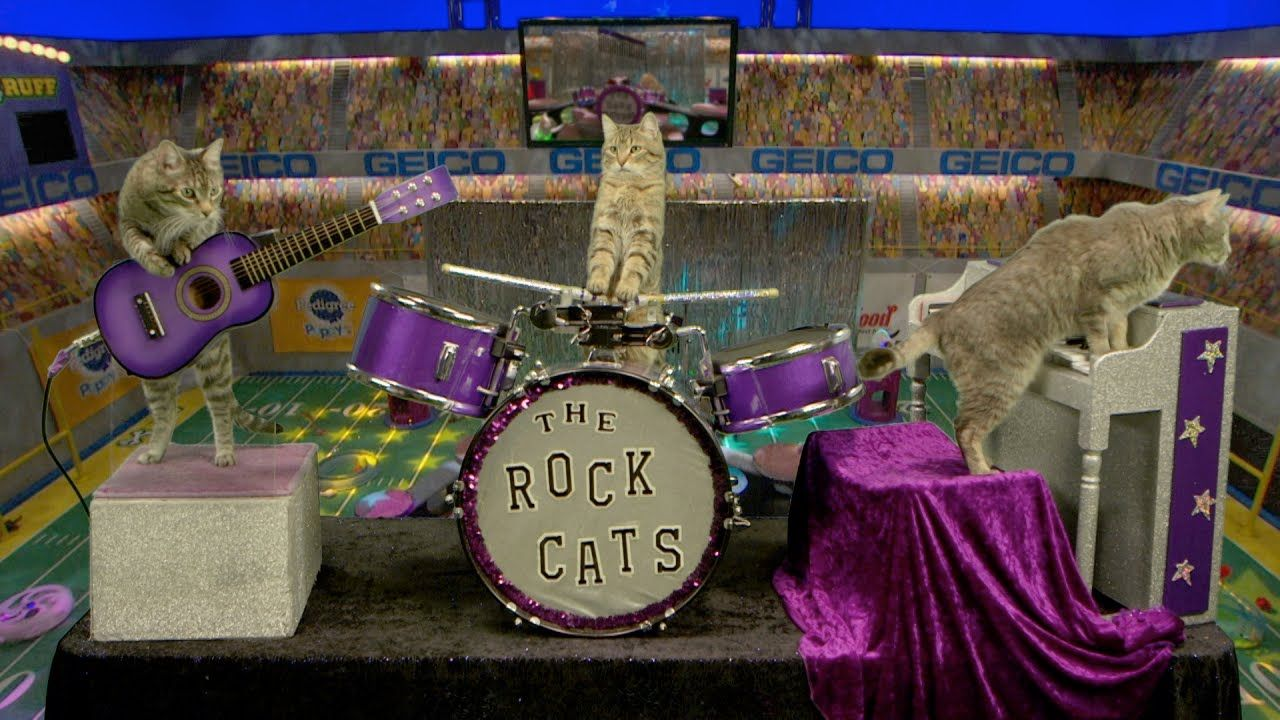 Here S Your Puppy Bowl Xiii Anthem From Kitty Gaga And The Rock Cats Puppy Bowls Puppies Cats