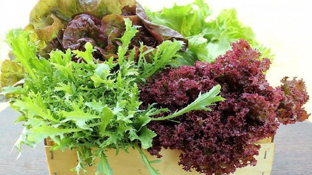 287. Как посеять салат. Проверенные способы для разных ...