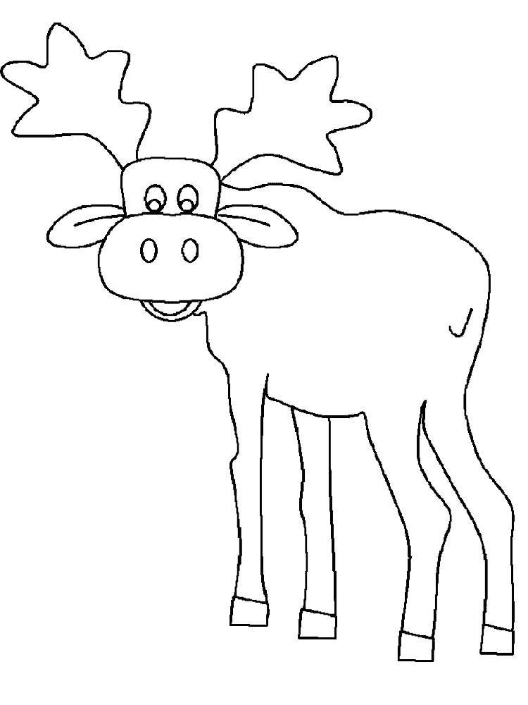Free Printable Moose Coloring Pages Animal Coloring Pages Coloring Pages Free Printables