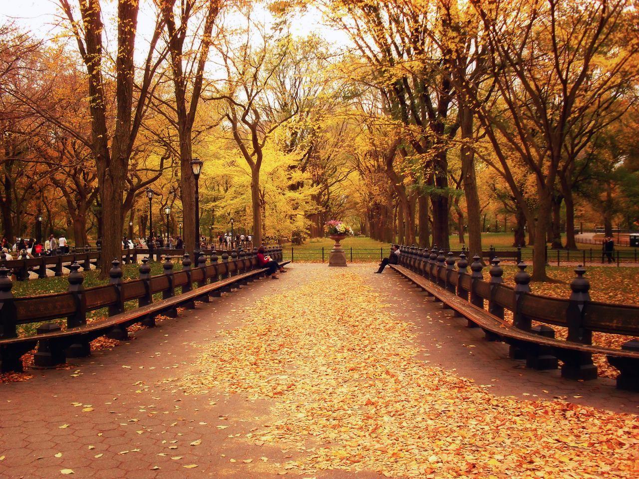 autumn_in_central_park_new_york_city_new_york-1578764