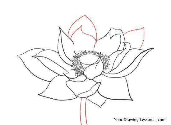 Lotus flower pencil drawing etc pinterest lotus flower and lotus lotus flower pencil drawing mightylinksfo