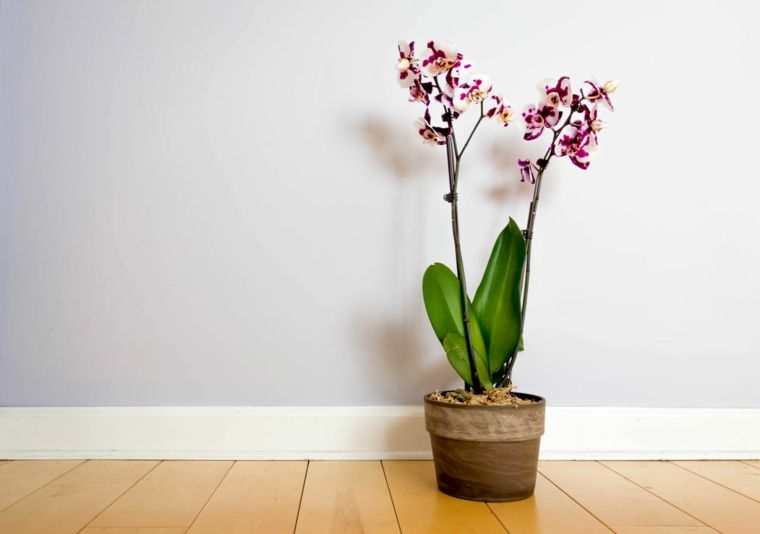 Comment Prendre Soin D Une Orchidee A La Maison Tout Sur L