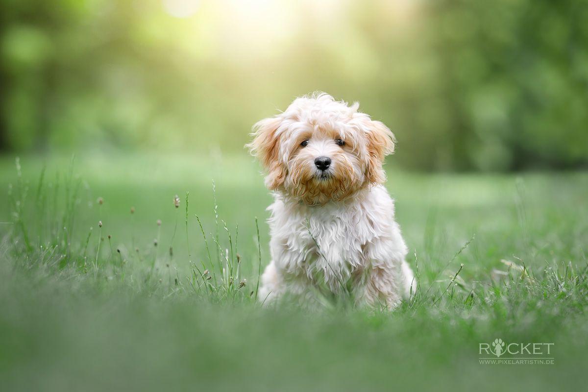 Pin Auf My Dog