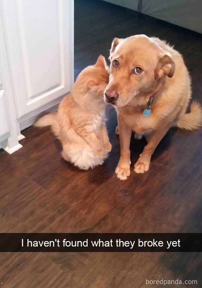 16 More Hilarious Cat Snapchats That Are Im-paw-sible Not To Laugh At - We Love Cats and Kittens #funnydogs