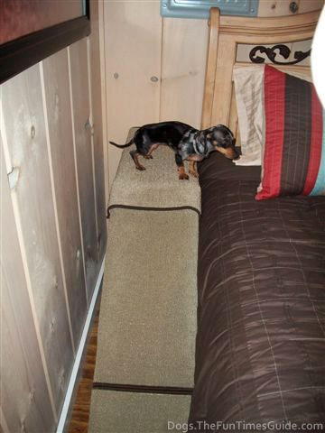 How To Build A Dog Ramp Yourself Dog ramp for bed, Dog