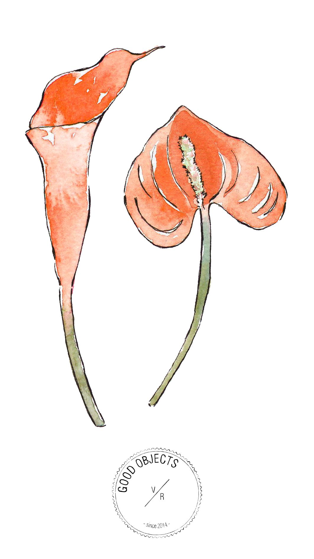 Good Objects Orange Anthurium Flowers Flamingoflowers Watercolor Flower With Images Anthurium Flower Watercolor Illustration Anthurium