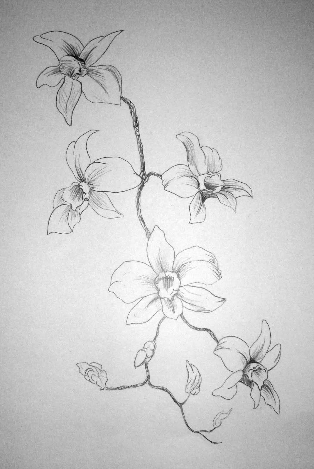 Flower drawings flower drawings flower pencil drawings flower sketches drawing flowers plant