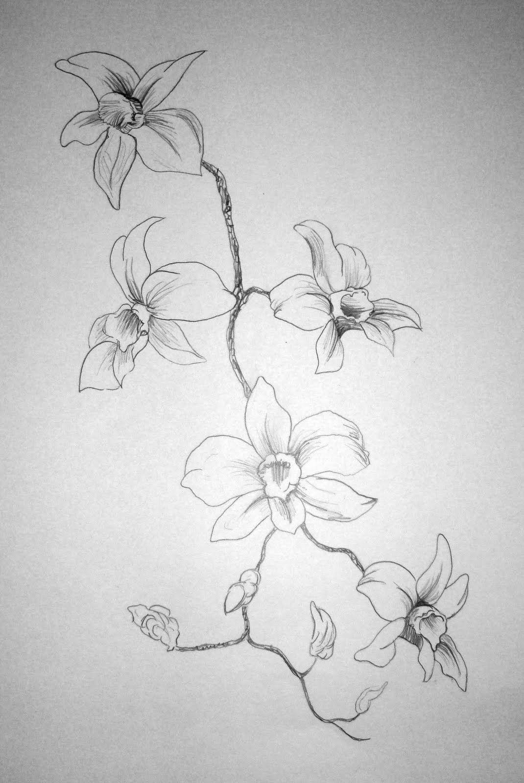 Flower pencil drawings hd wallpaper