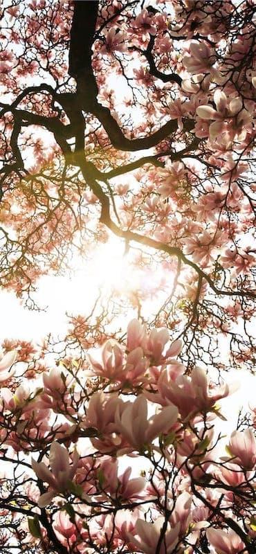 خلفيات ورد للايفون Spring Wallpaper Spring Pictures Amazing Hd Wallpapers