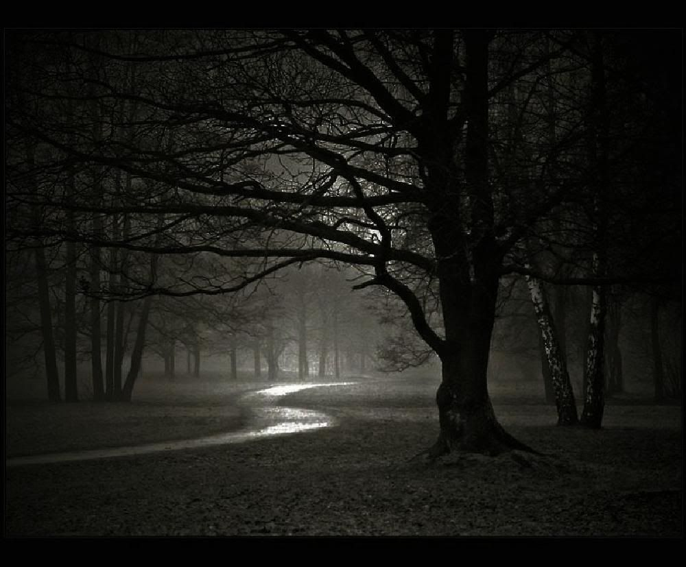 Dark Scary Forest | caravanserai: dont let darkness fall into our lives
