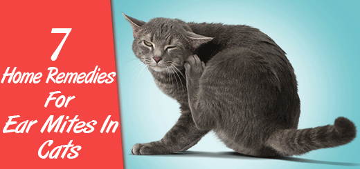 7 Home Remedies For Ear Mites In Cats Although Mites In Cats Can Be Complicated To Treat There Are Some Home Remedies For Mites In Cats T Natural Cat Remedies