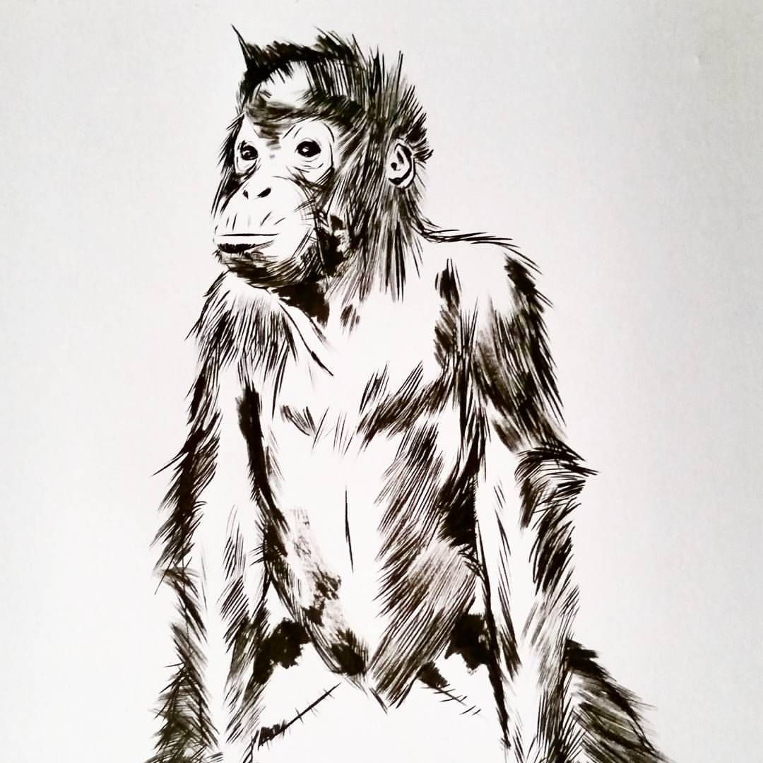 An Orangutan For Inktober Ape Drawing Animal Brushpen