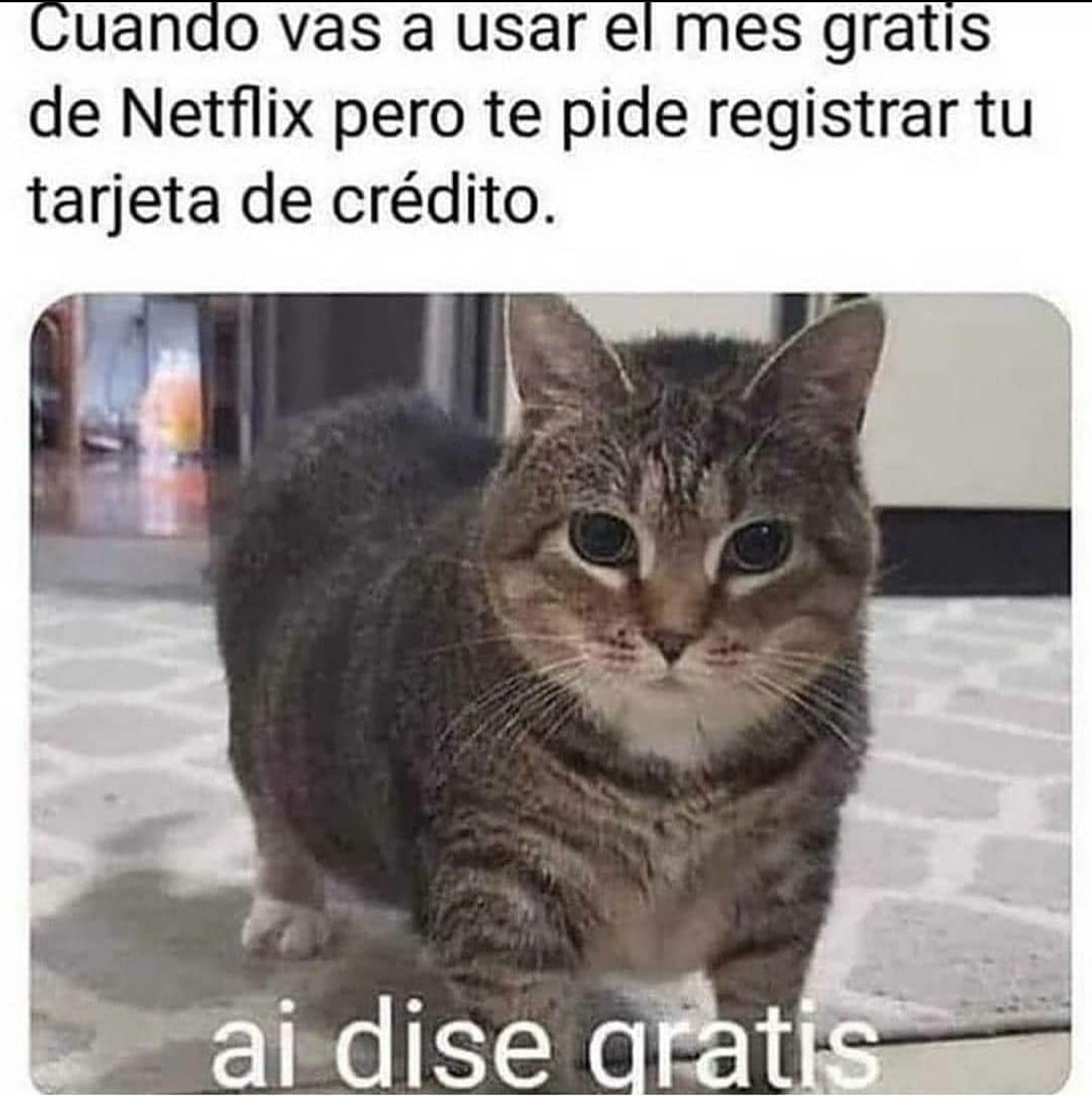 Mejores Memes Memes En Espanol Memes Meme Meme Del Dia Memes 2020 Dice Gratis Meme Divertido Meme Gracioso Memes