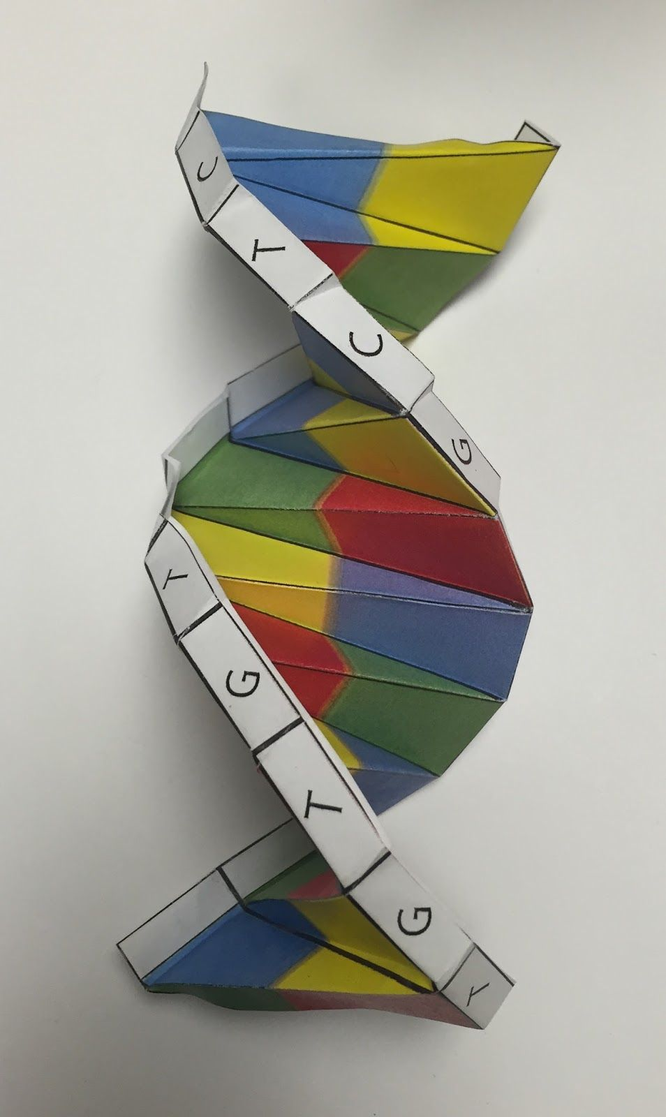 DNA Origami model | Genetics | Pinterest - photo#20