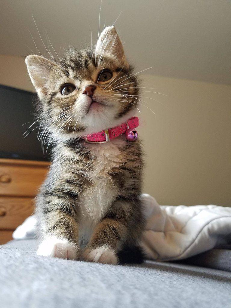 Смешная и милая картинка котика