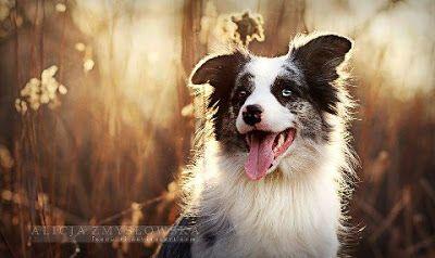 Dr Pet: Cães - Anjos de Deus! ''Os cães são o nosso elo com o paraíso. Eles não conhecem a maldade, a inveja ou o descontentamento. Sentar-se com um cão ao pé de uma colina numa linda tarde, é voltar ao Éden onde ficar sem fazer nada não era tédio, era paz.'' (Milan Kundera)