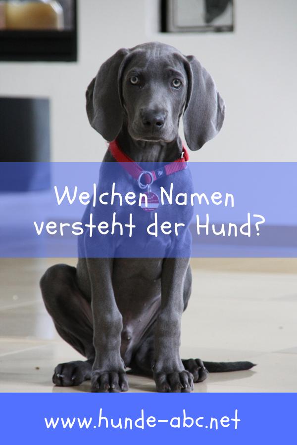 Den Richtigen Hundenamen Finden Allgemeine Infos Hundenamen Hunde Hunde T Shirts