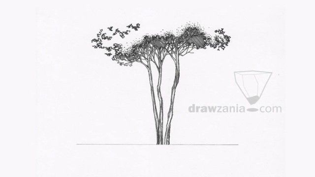 Architecture Drawing Of Trees landscape architecture tree drawings landscape drawing basic trees