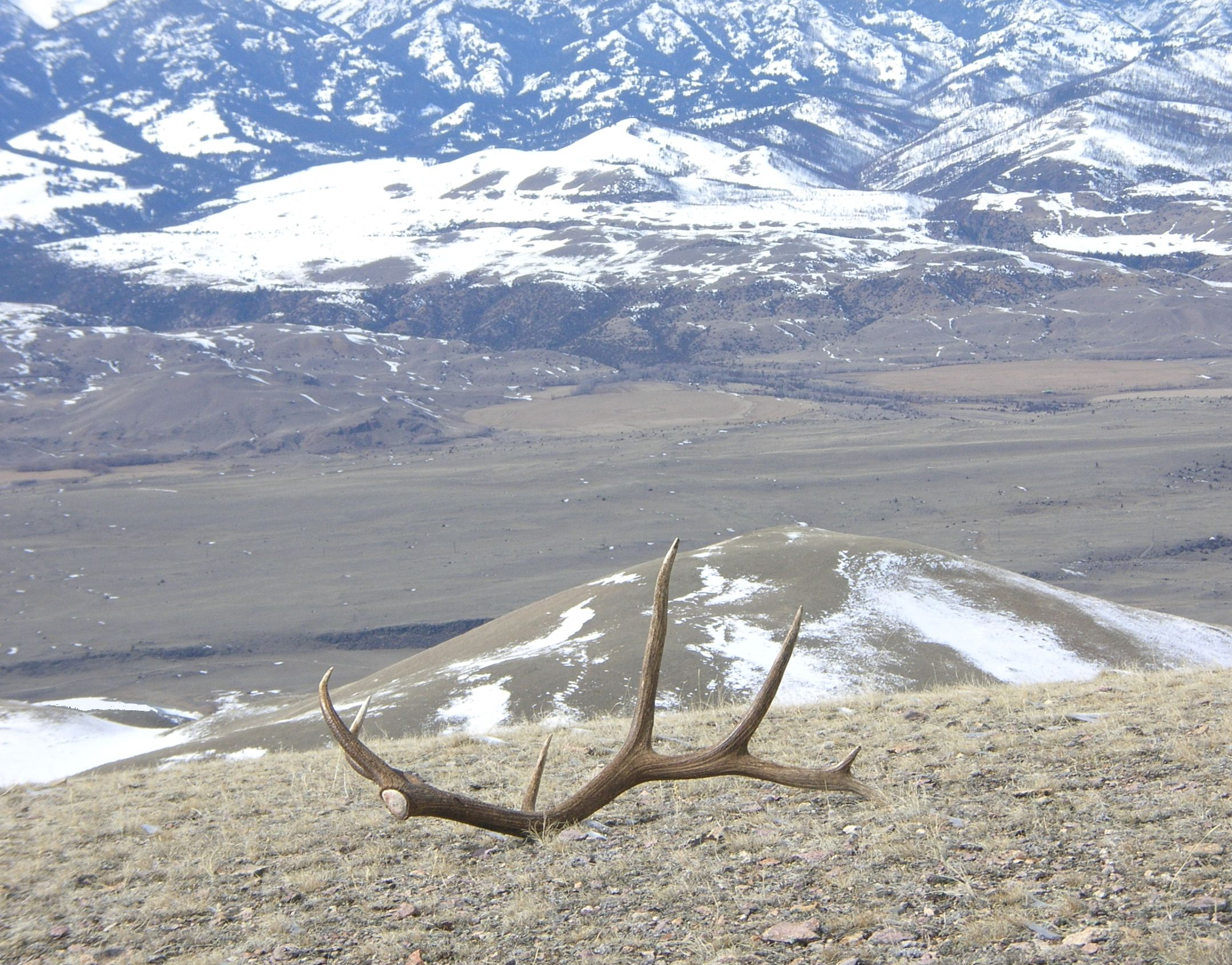 Beautiful 7 point shed elk antler Hunting pictures, Shed